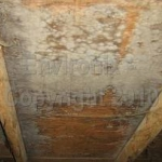 mold-from-water-intrusion